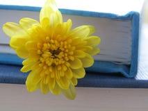 Inre solsken Royaltyfria Bilder