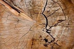 Inre textur för trädstam Arkivbilder