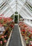 inre traditionellt för växthus Arkivbilder