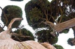 inre tree Fotografering för Bildbyråer