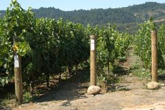 inre vingård Arkivfoton
