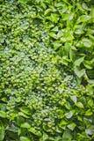 Inredesign, paneler av gräs och växter på väggen, garneringtextur av gröna sidor Arkivfoton
