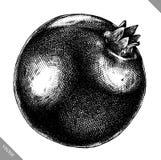Inrista drog grafiska vektorillustrationen för granatäpplet handen Arkivbild