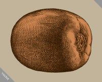 Inrista drog grafiska vektorillustrationen för kiwin handen Arkivfoto