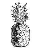 Inristad ananas skissar vektor illustrationer
