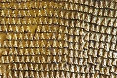 Inristade buddha avbildar på Pindaya grottors vägg - Myanmar arkivfoton