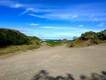 Insabbi con il cespuglio della spiaggia alle dune di sabbia di Sigatoka fotografia stock libera da diritti