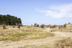 Insabbi il paesaggio, il parco nazionale Zuid Kennemerland, Paesi Bassi Immagine Stock