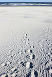 Insabbi la natura morta alla spiaggia di Ameland nei Paesi Bassi Fotografia Stock Libera da Diritti