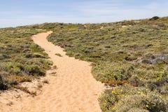 Insabbi la traccia, i fiori e la vegetazione nella spiaggia in Almograve Fotografia Stock Libera da Diritti