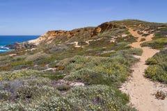 Insabbi la traccia, i fiori e la vegetazione nella spiaggia in Almograve Immagini Stock