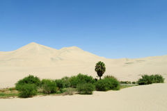 Insabbi le dune del deserto e l'oasi verde con i cespugli e la palma Immagini Stock Libere da Diritti