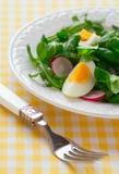 Insalata con l'uovo bollito Fotografie Stock Libere da Diritti