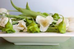Insalata del tulipano del pepe Fotografie Stock