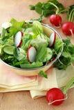 Insalata della verdura fresca dei cetrioli Fotografia Stock