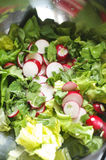 Insalata fresca Immagine Stock