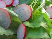 Insalata verde con il ravanello Immagine Stock