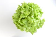 Insalata verde della verdura della quercia Immagini Stock Libere da Diritti