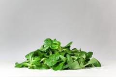 Insalata verde fresca Fotografia Stock Libera da Diritti