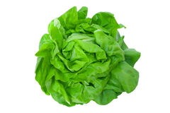 Insalata verde Fotografie Stock