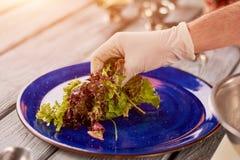 Insalata verde mettente del cuoco unico sul piatto della porcellana Fotografie Stock Libere da Diritti