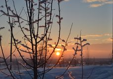 Insanely beautiful winter sunset. Sunset tree bokeh beauty landscape snow on twigs Russia Tomsk Siberia Royalty Free Stock Photography