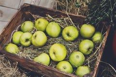 Inscatoli la scatola con le mele raccolgono nel giardino di caduta Immagini Stock Libere da Diritti