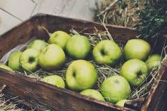 Inscatoli la scatola con le mele raccolgono nel giardino di caduta Fotografie Stock