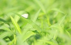 Inscet na zielonym liściu Zdjęcie Royalty Free