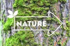 Inschrijvingsaard op de de schorsachtergrond van de pijlboom het concept ecologie Natuurlijke banner royalty-vrije stock foto