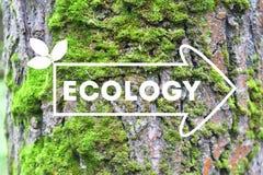 Inschrijvingsecologie op de de schorsachtergrond van de pijlboom het concept ecologie Natuurlijke banner stock fotografie