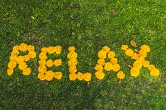 Inscrição que relaxa na grama com flores amarelas Imagens de Stock