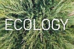 Inscri??o ?ecologia ?no fundo de uma planta verde viva fotografia de stock