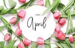 Inscripci?n hola abril Flor del tulip?n fotografía de archivo libre de regalías