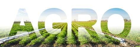 The inscription Agro on the background of a potato plantation field. Agribusiness and agro-industry. Agriculture. The use of. Innovative technologies, equipment stock photo