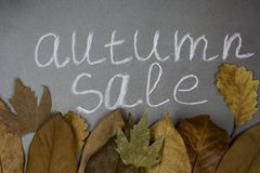 Inscription autumn sale on a chalkboard with autumn leaves royalty free stock image