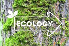 Inscription Ecology on the arrow tree bark background The concept of ecology Natural banner stock photography