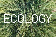 Inscription `Ecology` on the background of a living green plant stock photography