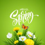 Inscription Hello Spring on background with spring flowers. Vector illustration. EPS10 Royalty Free Illustration