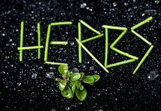 The inscription herbs from stems of chive with water drops Royalty Free Stock Photo