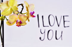 The inscription `I love you`. On the orchid is a gift - a wedding ring on the background of the inscription `I love you stock photography