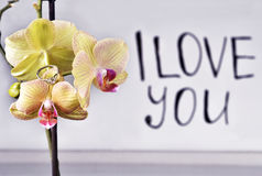 The inscription `I love you`. On the orchid is a gift - a wedding ring on the background of the inscription `I love you royalty free stock photo