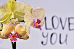 The inscription `I love you`. On the orchid is a gift - a wedding ring on the background of the inscription `I love you royalty free stock image