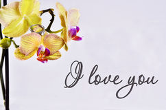 The inscription `I love you`. On the orchid is a gift - a wedding ring on the background of the inscription `I love you stock photos