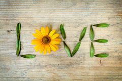 Inscription love, laid out of a yellow daisy and leaves on a wooden background. Concept love of nature, environment. Romantic mood Royalty Free Stock Photography
