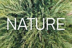 Inscription `Nature` on the background of a living green plant vector illustration