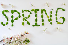 Inscription spring with green leaves on white Stock Images