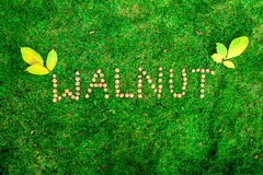 Inscription of walnuts on the grass. Inscription of walnuts on the green grass Stock Photos