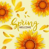 Welcome spring background. Inscription Welcome spring in background blooming flowers of sunflower and flying petals.Vector illustration vector illustration