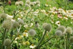 Insec fluga över blomman royaltyfri bild
